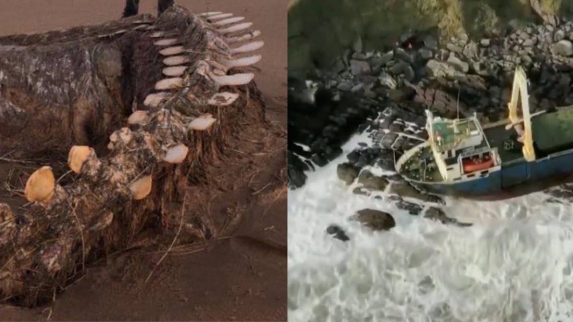 Navi e mostri marini fra gli scheletri della tempesta